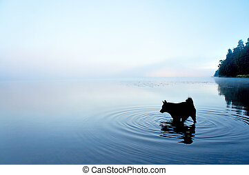 dog in lake - silhouette of black dog playing in shallow...