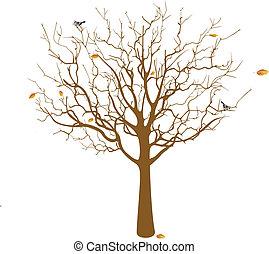 Fall, Naked tree