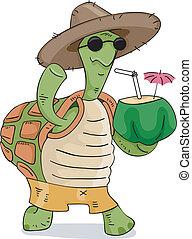 tortue, noix coco, boisson