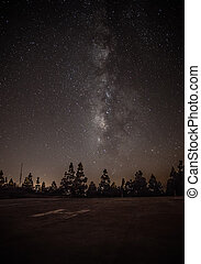 Milkyway on forest - the milky way and tree in a perfect...