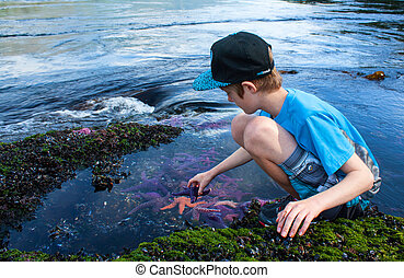 boy discovering marine life - a young boy discovering marine...