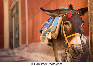 Donkey of Santorini - Traditional tourist attraction. Donkey...