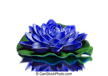 Blue lotus on green support with white background.