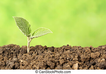 Beginning of a new life - A seedling is growing in the dirt,...