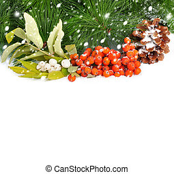 A twig of mountain ash and pine branch with cone on snow background