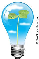 bulb seedling