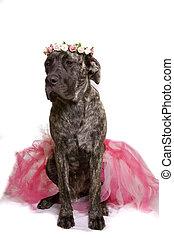 Ballerina doggy - Larg