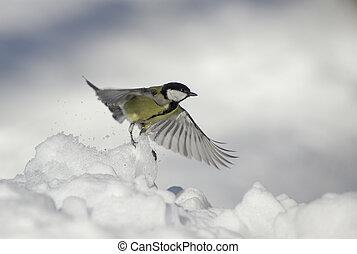 takeoff