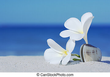 Two flowers - Two plumeria flowers on sandy beach
