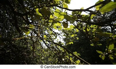 Tree With Sun - video footage of a tree in the sun