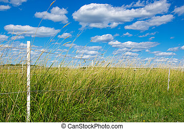 Green pasture under the blue sky
