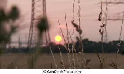 Field in Sunset - video footage of a acre at sunset in...
