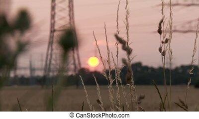 Field in Sunset