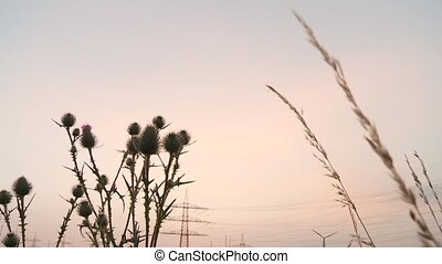 Field in Sunset - video footage of a wind engine in a acre...