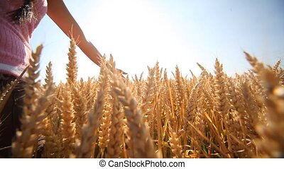 Woman in Grainfield - video footage of a hand of a woman in...