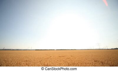 Woman in Grainfield