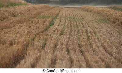 Harvested Grainfield - video footage of a Harvested...
