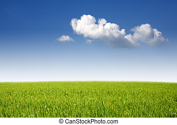 Yellow paddy filed and fluffy cloud