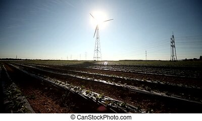 Wind Engine Shadow - video footage of strawberry field and a...