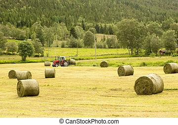 Hay bales - Farmer harvesting hay bales, Norway