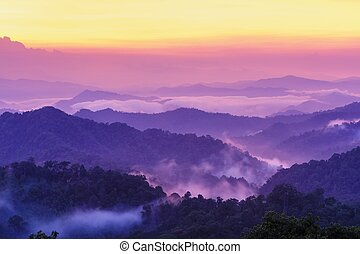 Beautiful twilight landscape in rain forest. - Beautiful...