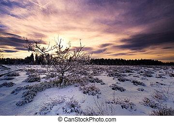 winter landscape - beautiful winter landscape in the...