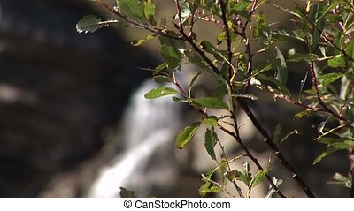 Waterfall - video footage of a waterfall in the austrian...