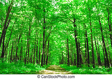 nature. green forest in summer