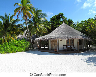 Maldivian beach bungalow with coconut trees...