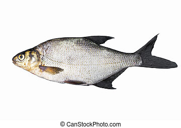 Common bream (Abramis brama), isolated on white
