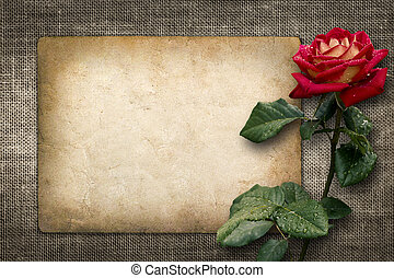 Card for invitation or congratulation with red rose in...