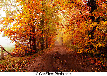 autumn in the forest - autumn colors in the forest with a...