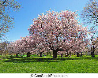 Pink Blossoming tree against the blue sky