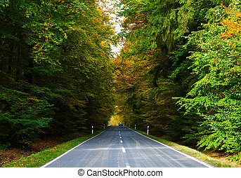 road in autumn - A road through an autumn forest