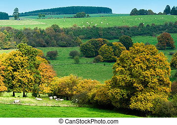 beautiful autumn country landscape in belgium (Ardennes)