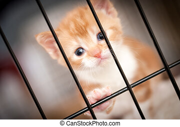 not guilty - sad face of a tiny kitten behind the bars of...