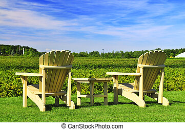 Chairs overlooking vineyard - Muskoka chairs and table near...