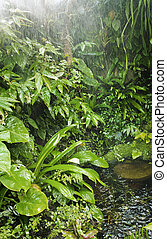 rainforest background - rain in tropical forest