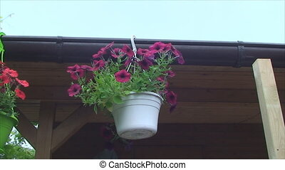 a flower-pot hanging on the roof of the house and swinging...