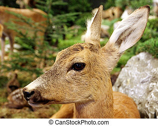 small baby deer fallow deer wild animals of the forest in...