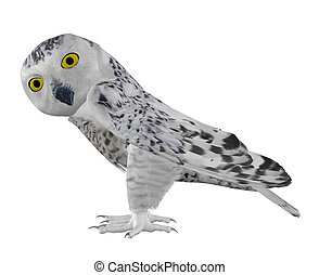 Snowy owl - Digitally rendered image of snowy owl on white...