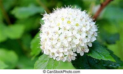 white round flower