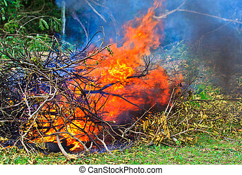 Bonfire in the forest Burning wood