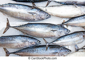 Tuna fish - Some tuna fishes exposed at the market