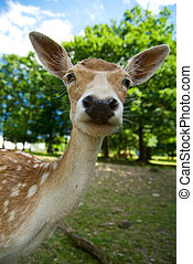 baby deer - funny picture of a baby deer taken with wide...
