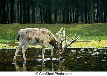 deer in the forest - close-up of a beautiful deer in the...