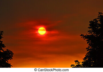 Red Sunset - Red sunset and tree silhouette- sun setting...