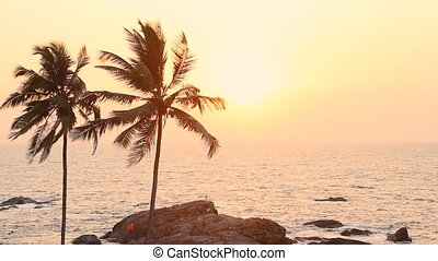 Palm Trees Silhouette At Sunset - India Goa Vagator beach...