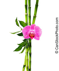 bamboo stalks with purple orchid - bamboo stalks with purple...