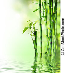 bamboo stalks on water  - bamboo stalks on water